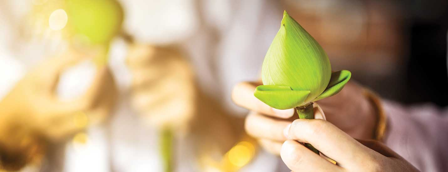 The Traditional Flower of Thailand | SenSpa Blog