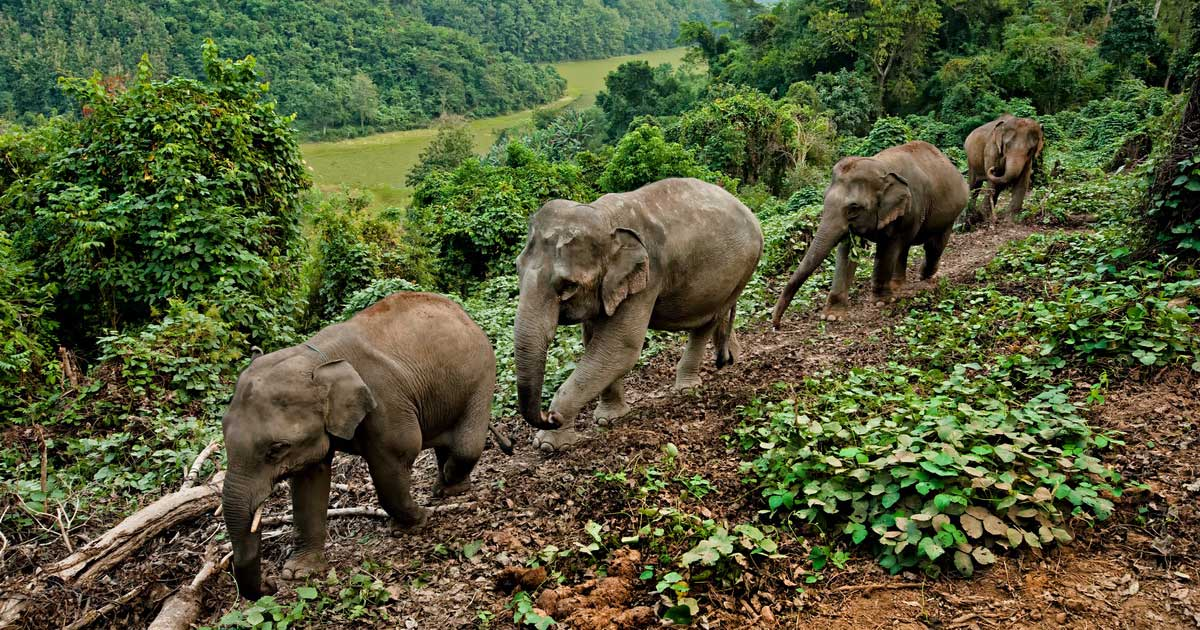 Charity-of-the-year-Elephant-Conservation_Center